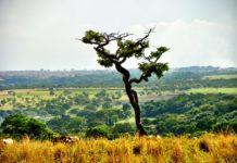 Photo of deforestation