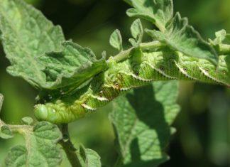 Photo of bug eating plant