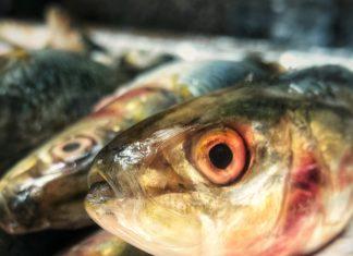 Photo of sardines