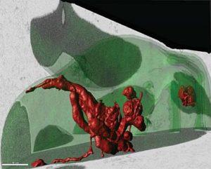 artist rendering of red blood cells