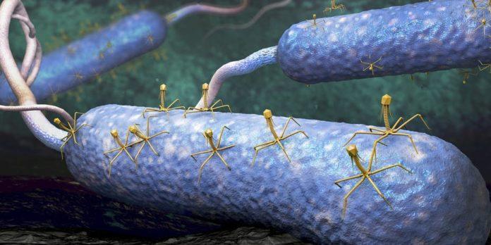 Artist rendering of bacteria being attacked by viruses.
