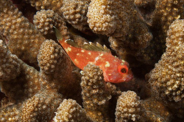 Phto of fish swimming among coral