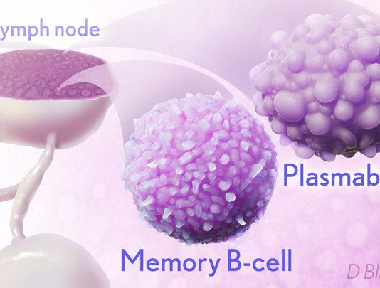 Artist rendering of immune cells