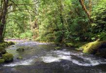 Photograph of a stream running through a forest